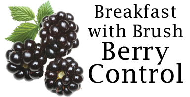 Breakfast with brush, berry control