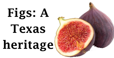 Figs: A Texas heritage