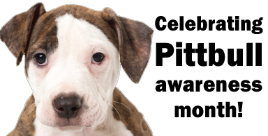 Adoption event to celebrate Pit Bull Awareness Month