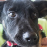 Pet of the Week Xena