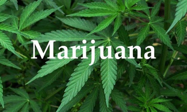 Legal Marijuana Is Becoming the Norm